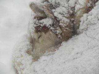 Bishop in snow